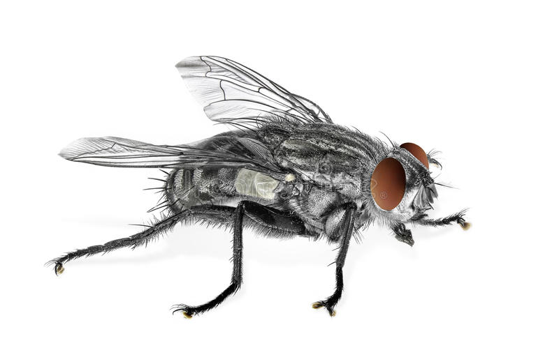 Fliege stockfotografie