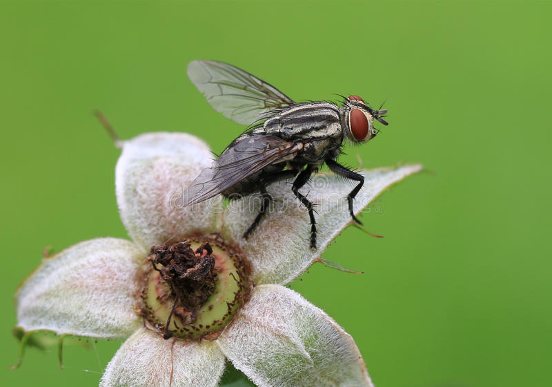 Fliege auf dem Kelch lizenzfreie stockfotos