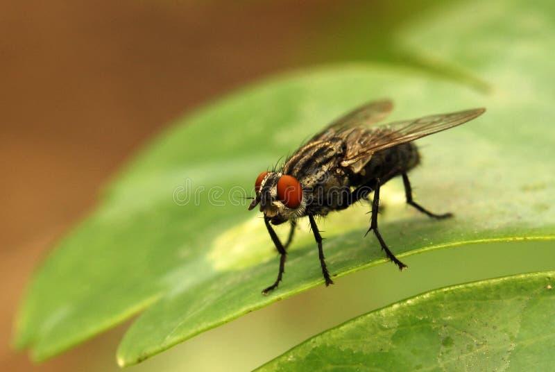 Fliege auf grünem Blatt stockbild