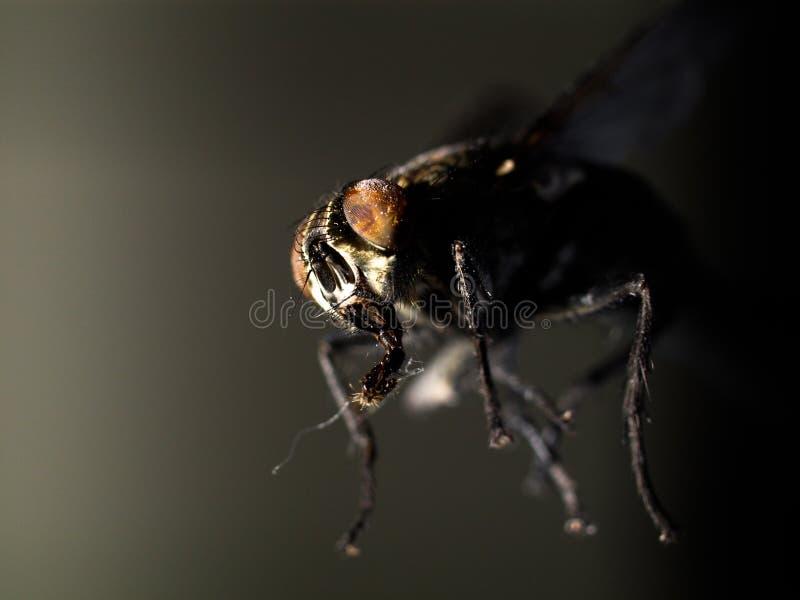 Fliege in der Dunkelheit stockbilder