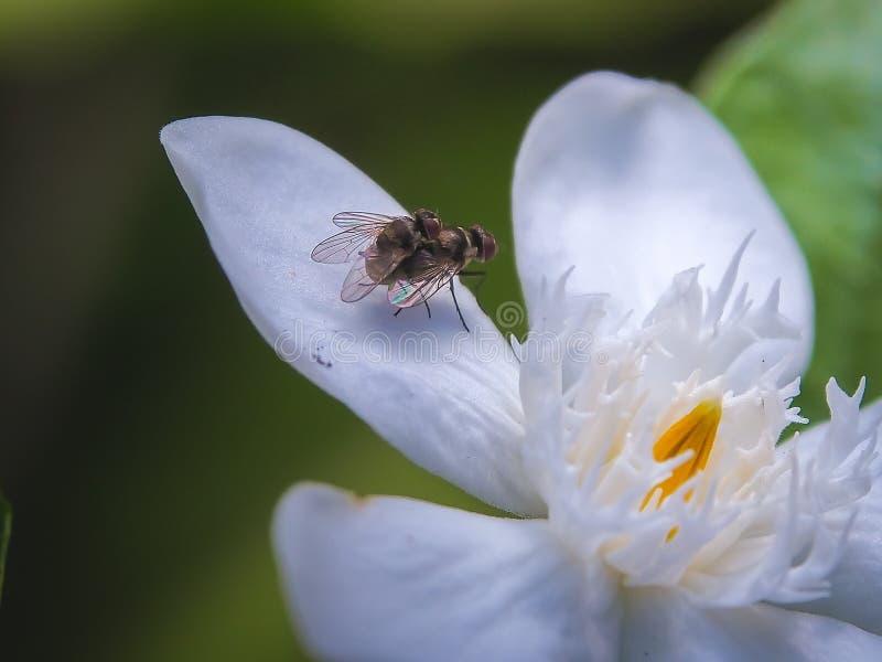 Fliege, die auf Blume verbindet lizenzfreie stockfotografie