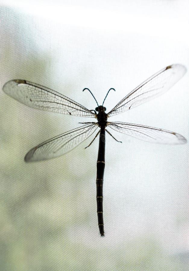 Fliege, die auf Fenstervorhang stillsteht lizenzfreies stockbild