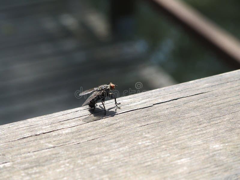 Fliege - Sie können die Details sehen stockbild
