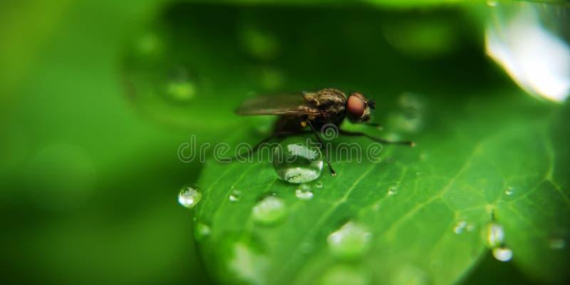 Fliege und Tropfen stockfotos