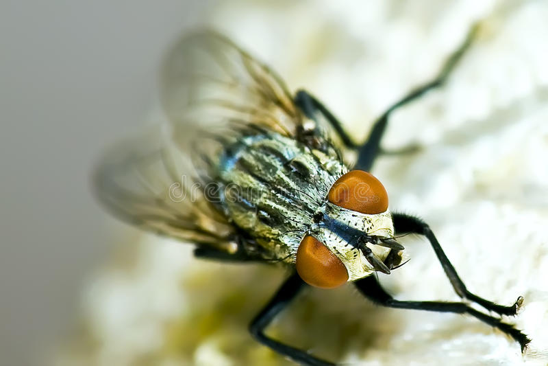 Fliegen stockfotos