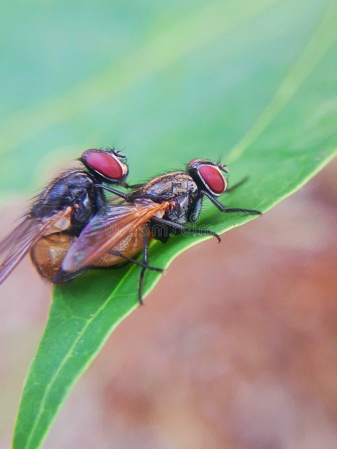 Fliegen auf einem Blatt stockfotografie