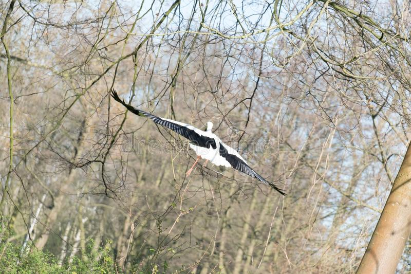Fliegen away dieser Storch stockfotos