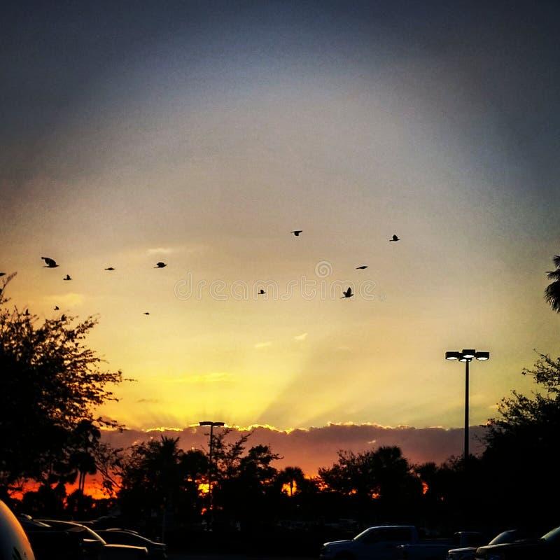 Fliegen in den Sonnenuntergang stockfotografie
