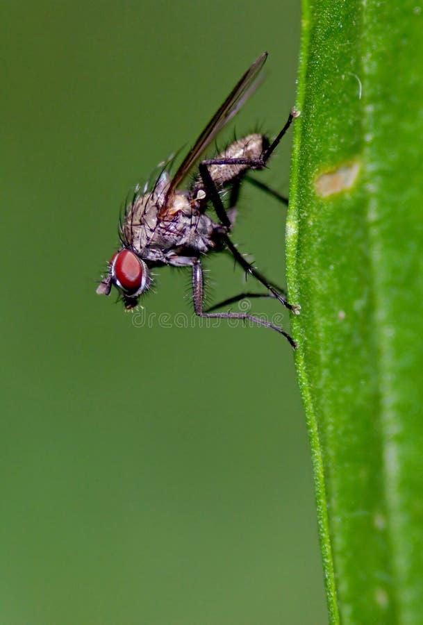 Fliegen im Gras stockfoto