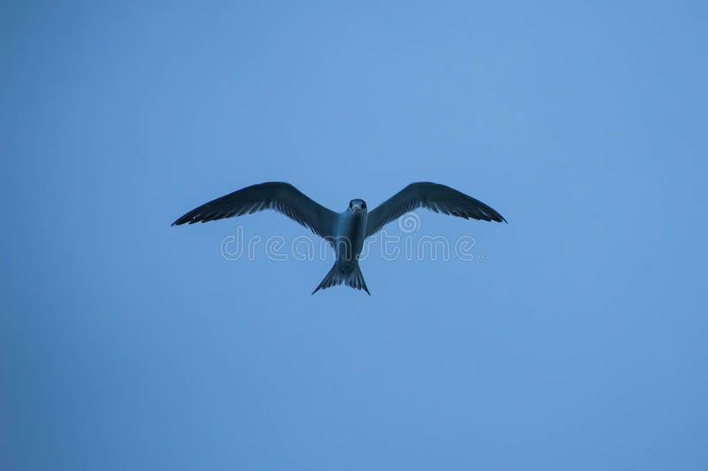 Fliegen pretel lizenzfreie stockfotos