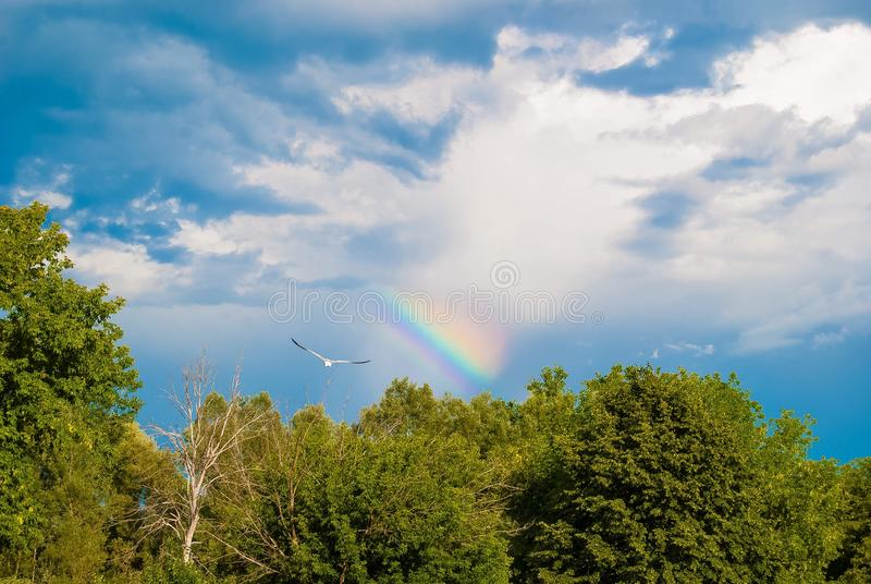 Fliegen-Regenbogen stockbild