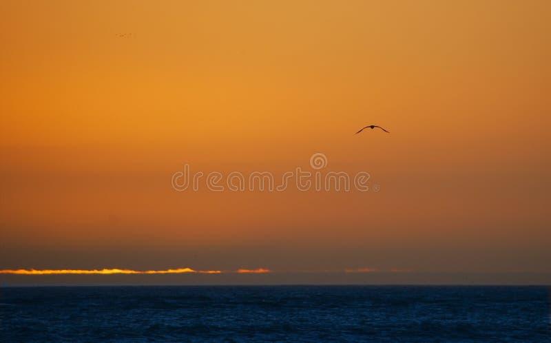 Fliegen in Richtung zum Sonnenuntergang stockfoto