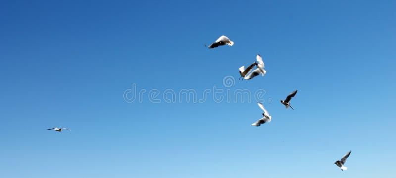 Fliegend säubern einige Vögel blauen Himmel lizenzfreie stockbilder