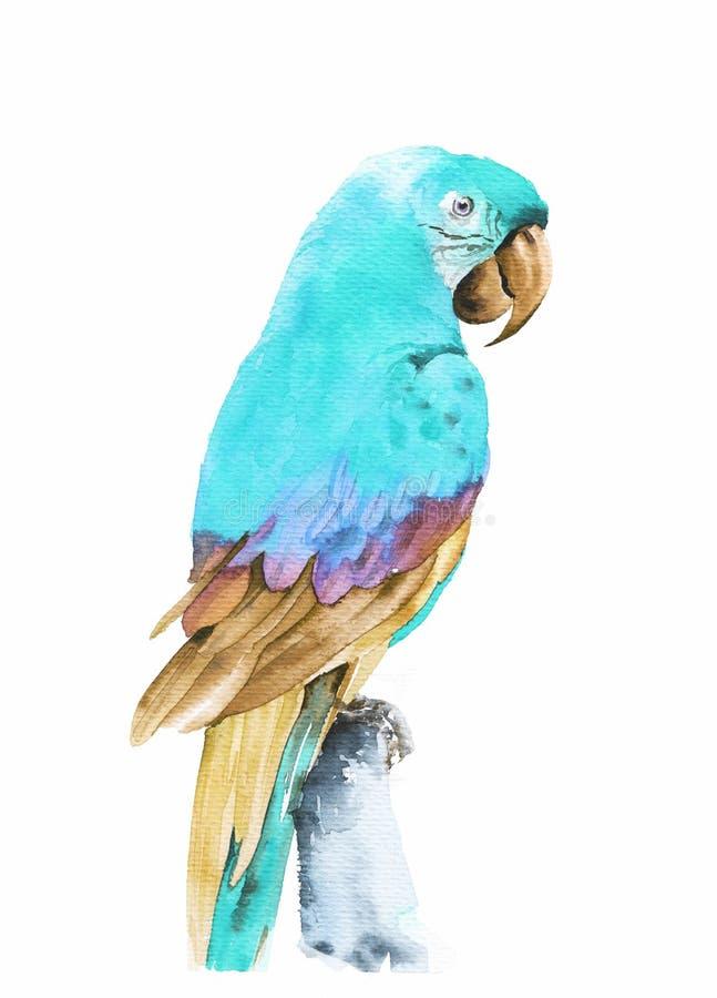 Fliegende tropische Papagei Aronst?be Gezeichnete Illustration des Aquarells Hand lizenzfreie abbildung
