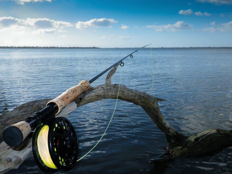 Fliegenrute und Spule auf alter Mangrove stockbild