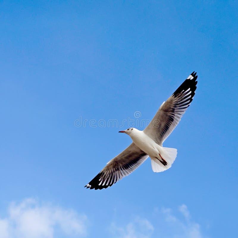Fliegenseemöwenvogel lizenzfreie stockbilder
