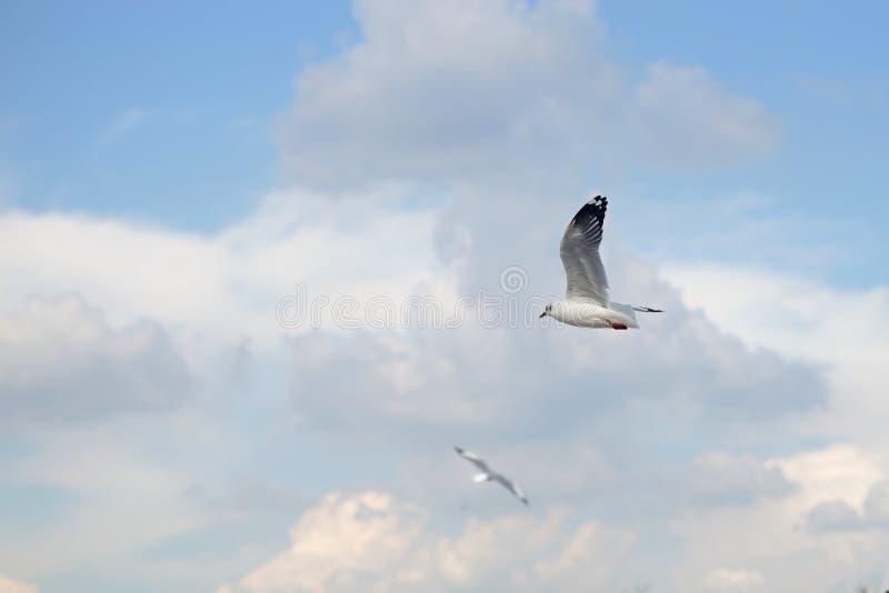 Fliegenseemöwenvogel stockfotografie