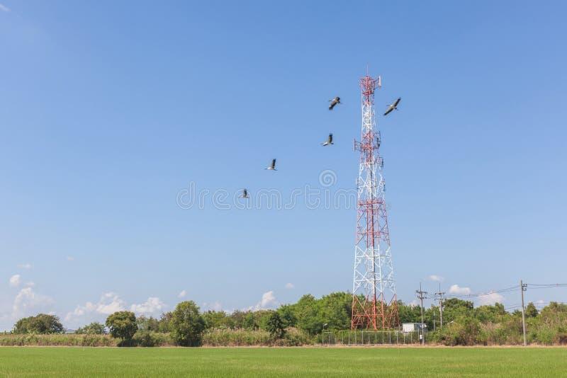 Fliegenvögel mit Telekommunikation ragen in das ländliche Ackerland hoch, Pro stockbild