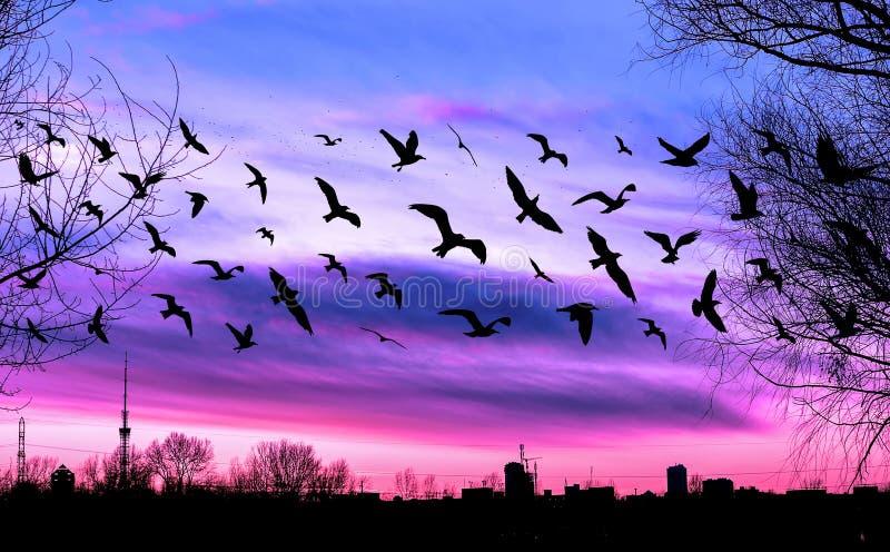 Fliegenvögel und -Stadtbild auf schönem purpurrotem Sonnenuntergang lizenzfreie stockfotos