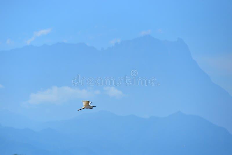 Fliegenvogel mit Hintergrund des Berges Kinabalu lizenzfreies stockbild