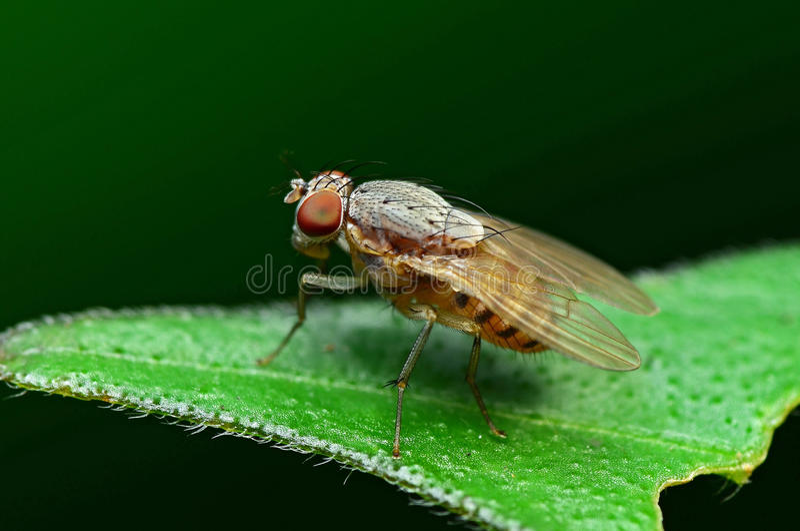 Flies. Animal jungle malaysia macro stock photo