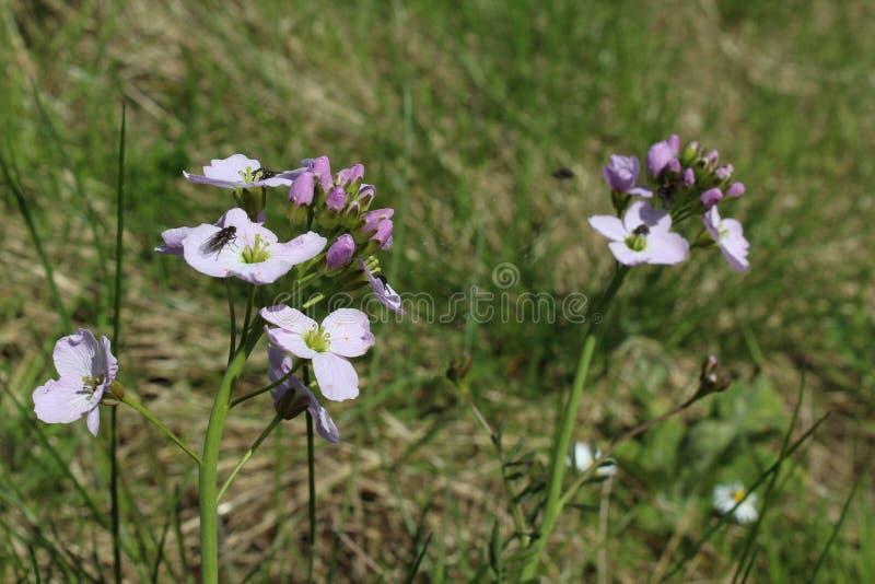 Flies on a flower stock photos
