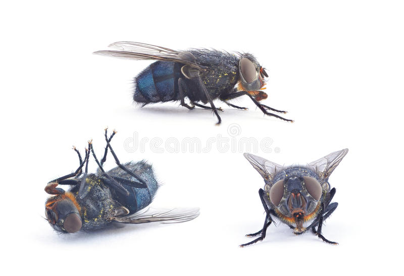 Flies. Set of flies on white background stock photography