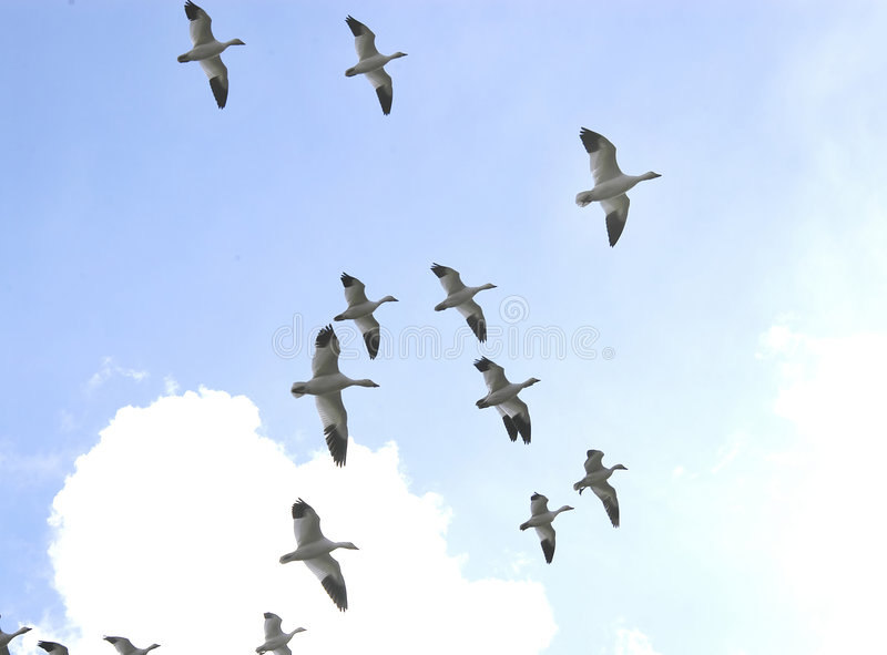 In Flight 2404 royalty free stock photography
