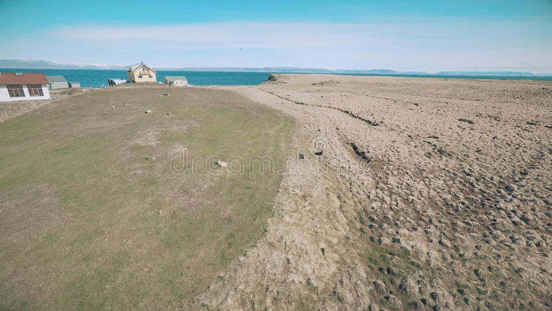 Flight along the coast of the island Vigur. The island is a home for thousands of birds e.g. eider ducks, arctic terns, puffins, black guillemot and more. The stock video footage