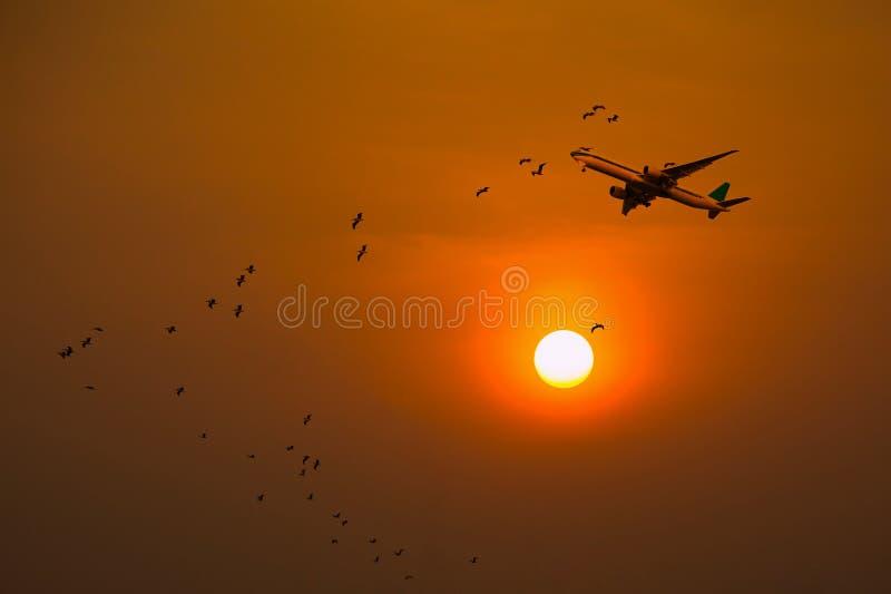 Flight and birds stock image