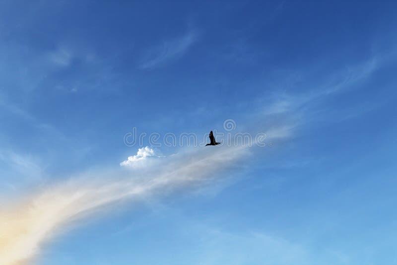 Flight of a black bird royalty free stock photo