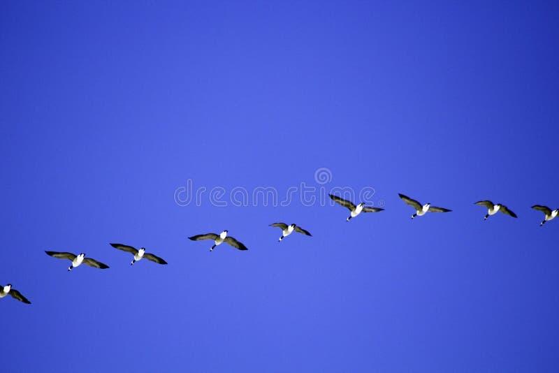 Flight Line stock images