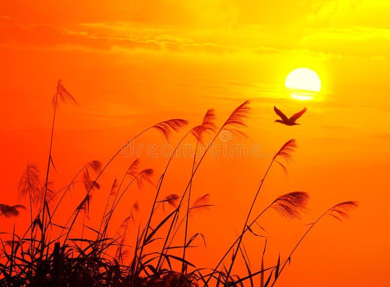 flighting ηλιοβασίλεμα πουλιών στοκ εικόνες με δικαίωμα ελεύθερης χρήσης