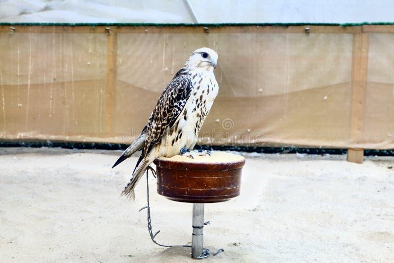 Flightless Bird royalty free stock image
