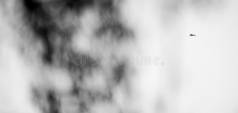 Fligth d'Eagle au noir infini photos stock
