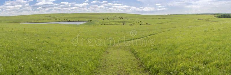 Flint Hills-panorama stock afbeeldingen