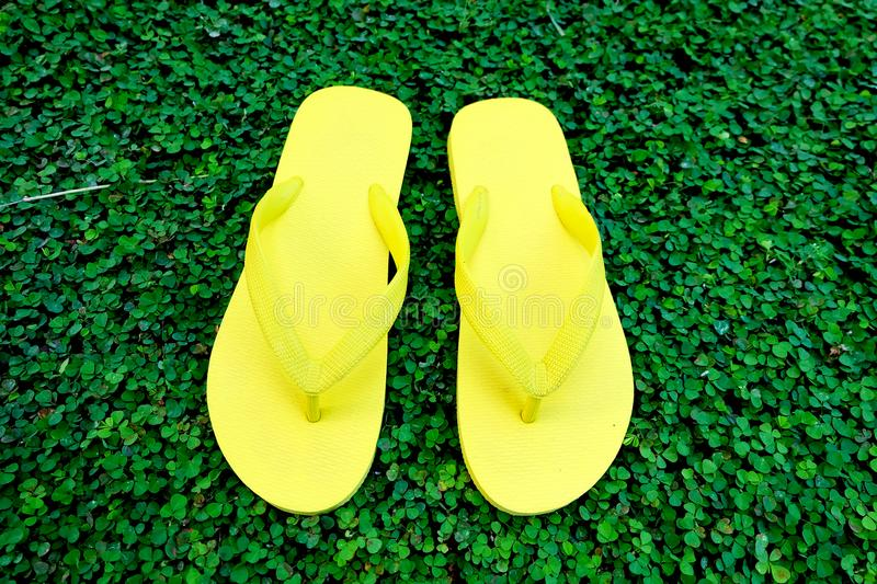 Flip Flop. Close Up Yellow Flip Flops Isolated on Green Grass Background stock image