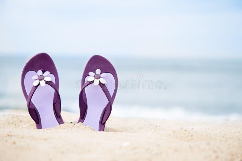 Flip-flops bonitos, roxos na praia fotografia de stock