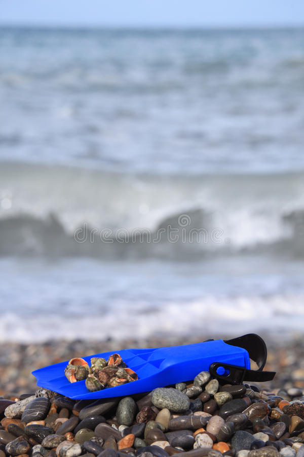 Download Flipper With Seashell On Stony Beach Stock Image - Image: 12262981