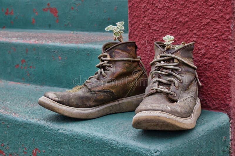 Flippiger alter Stiefel-Pflanzer lizenzfreies stockbild