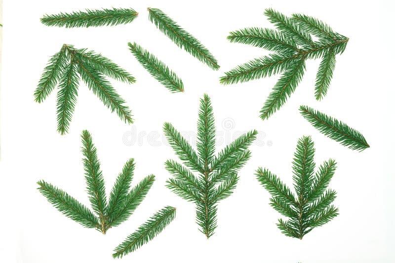 Flitter in einem blauen Glas Weihnachtsbaumast, Kiefernkegel, Tannenzweige auf weißem Hintergrund Flache Lage, Draufsicht, Kopien stockfotografie