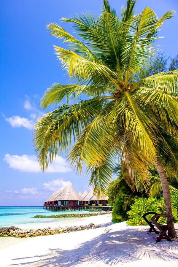 Flitterwochen in den Malediven, Eden auf Erde lizenzfreie stockbilder