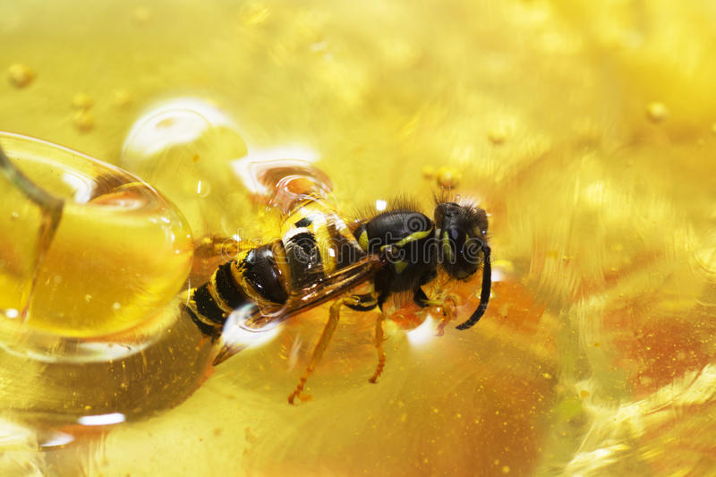 Float bee royalty free stock image