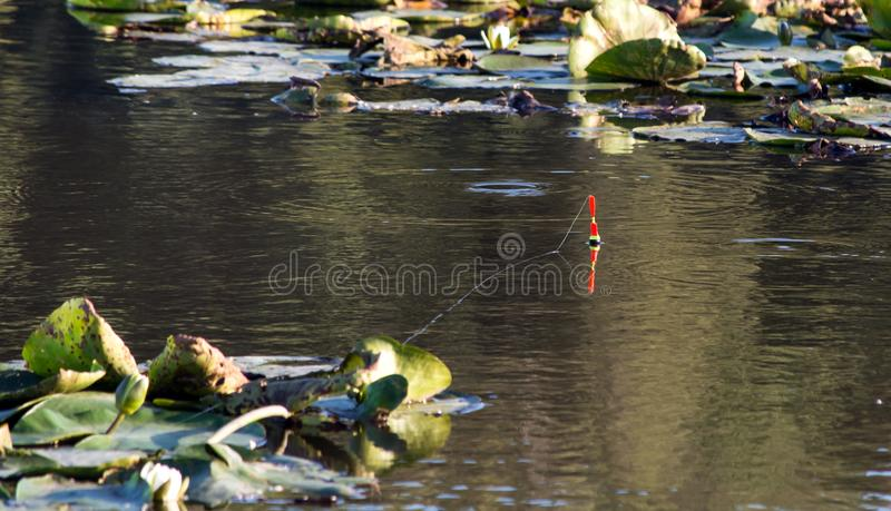 Float on the smooth surface of a river with lilies fishing. royalty free stock images