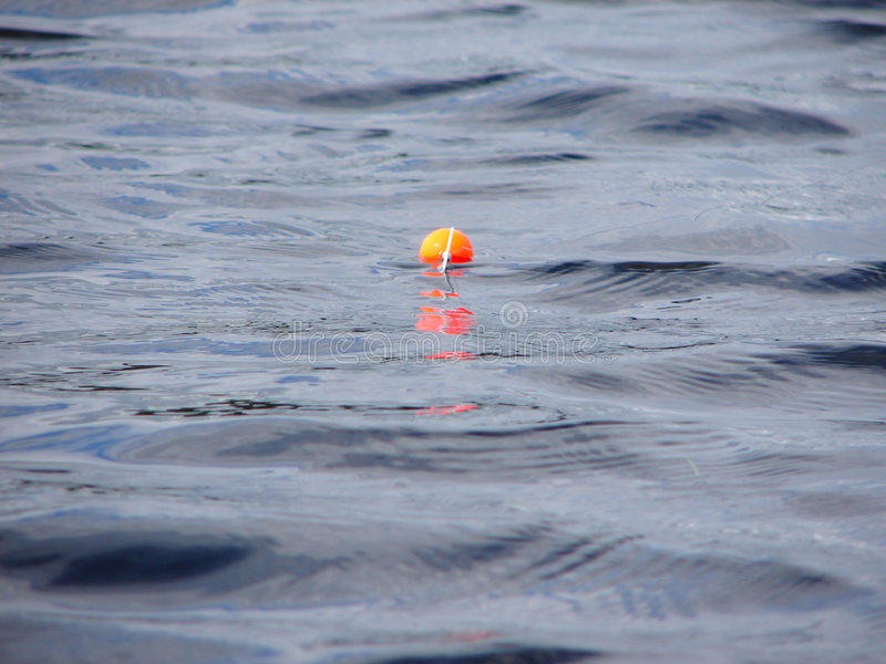 Download Float on water stock image. Image of lake, summer, fish - 6723883