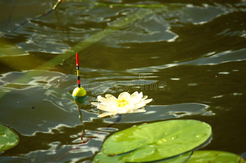 Float and water lily. Summer fishing trip with float fishing rod royalty free stock image