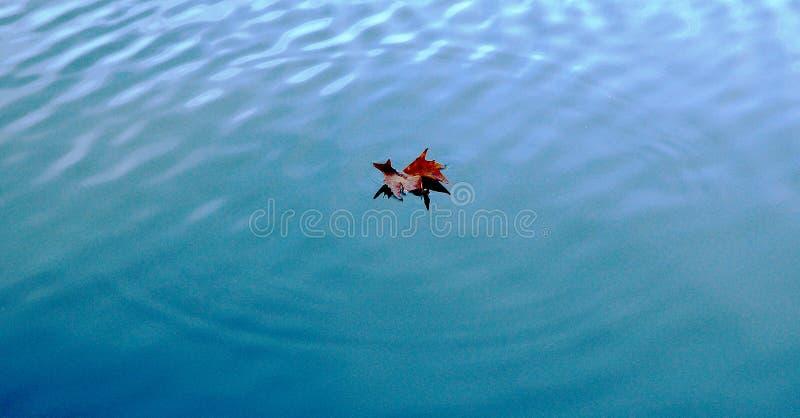 Download Floating stock image. Image of leaf, park, ripples, england - 76063