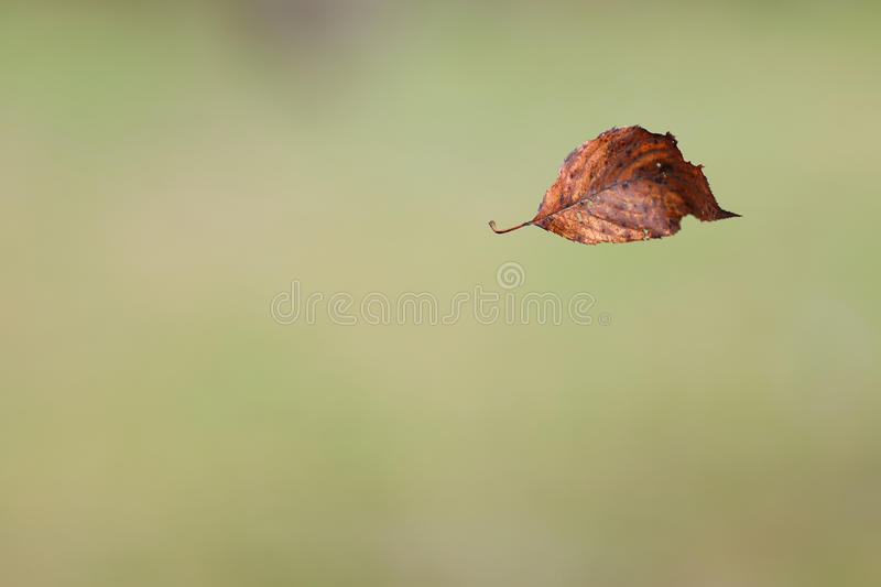 Floating Dry Leaf stock photography