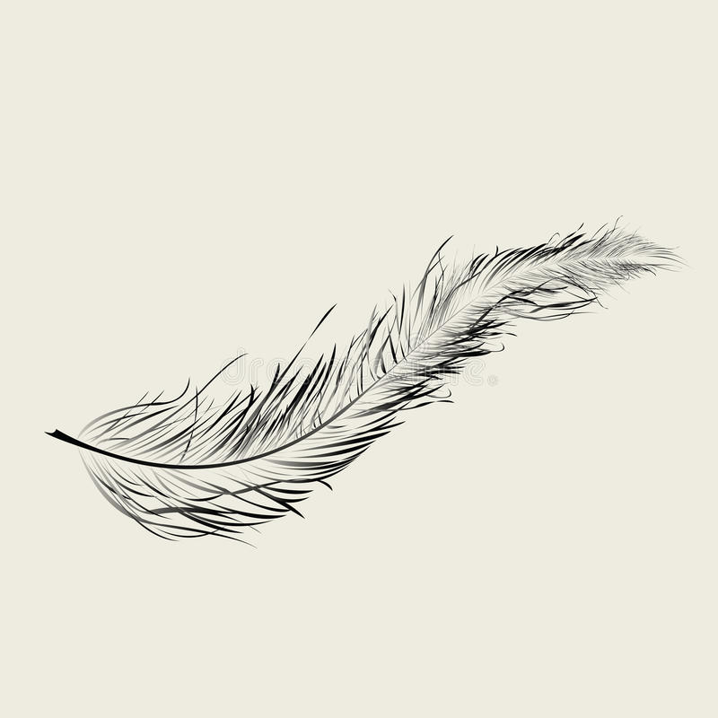 Floating feather stock illustration