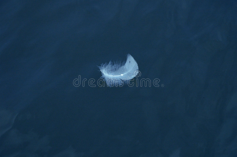 Download Floating Feather stock photo. Image of feather, river, background - 97066